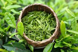 Зеленый чай, входящий в состав японской маски для лица