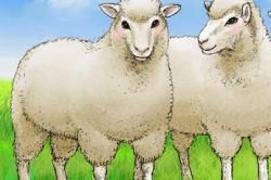 Использование плаценты животных для масок